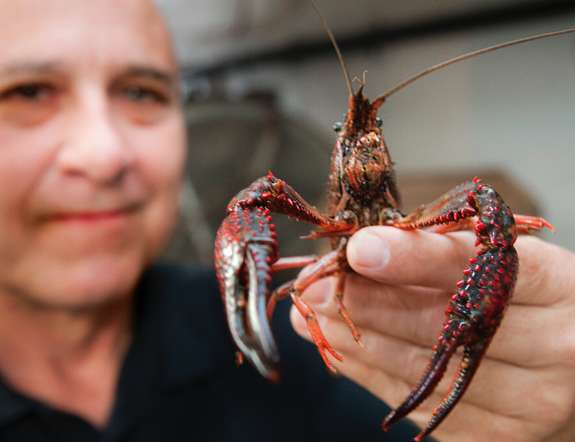 Will GOP Candidates Crawfish on H2B Visas for Legal Mexican Workers?